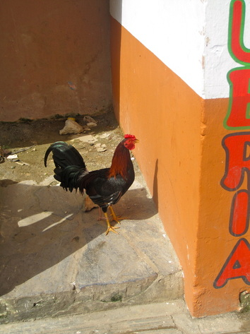 Las Terrenas Chicken